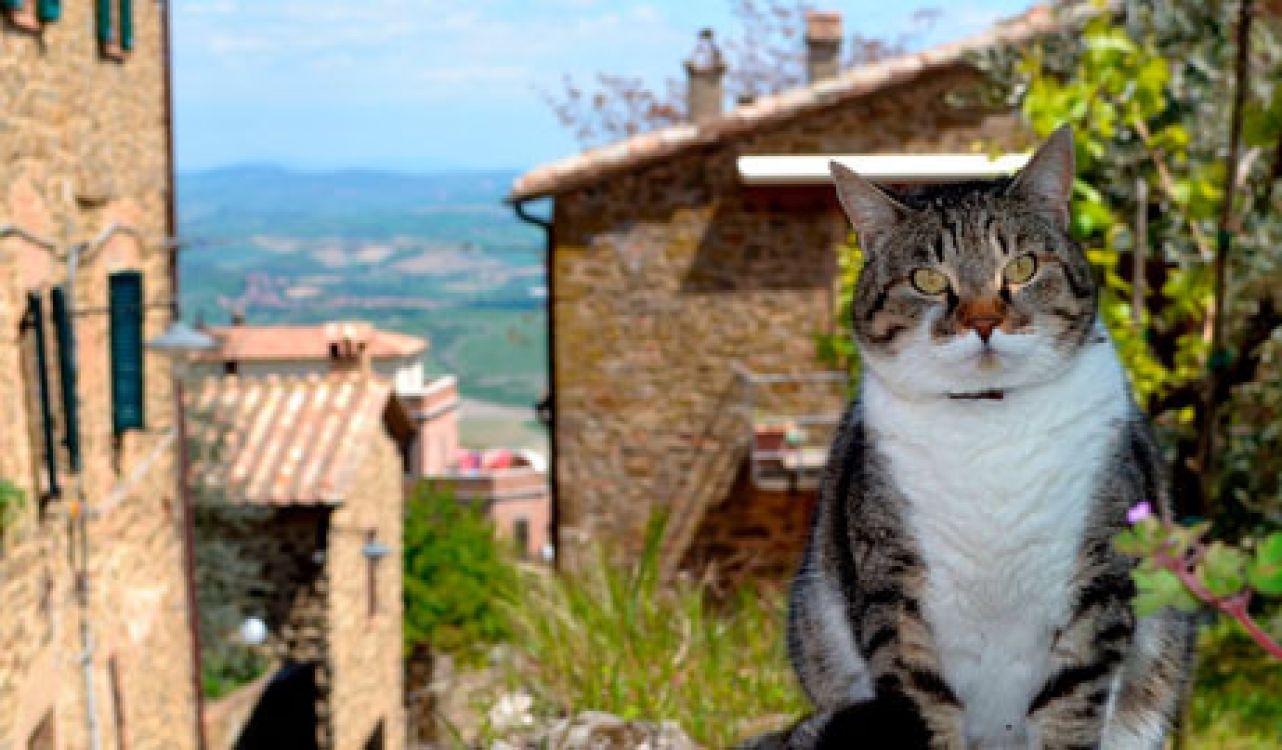 Los gatos como patrimonio biocultural